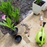 garden-life-ste-do-cli-22