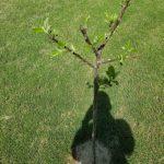 garden-life-ste-do-cli-23
