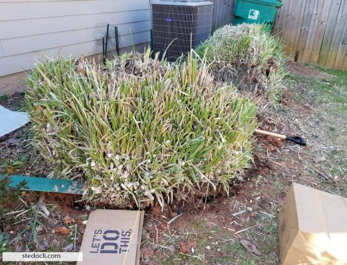 Removing Pompas Grass To Gain More Space For The Garden