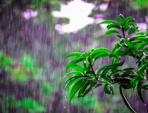 Nothing Like A Good Rain To Wash Away The Pollen