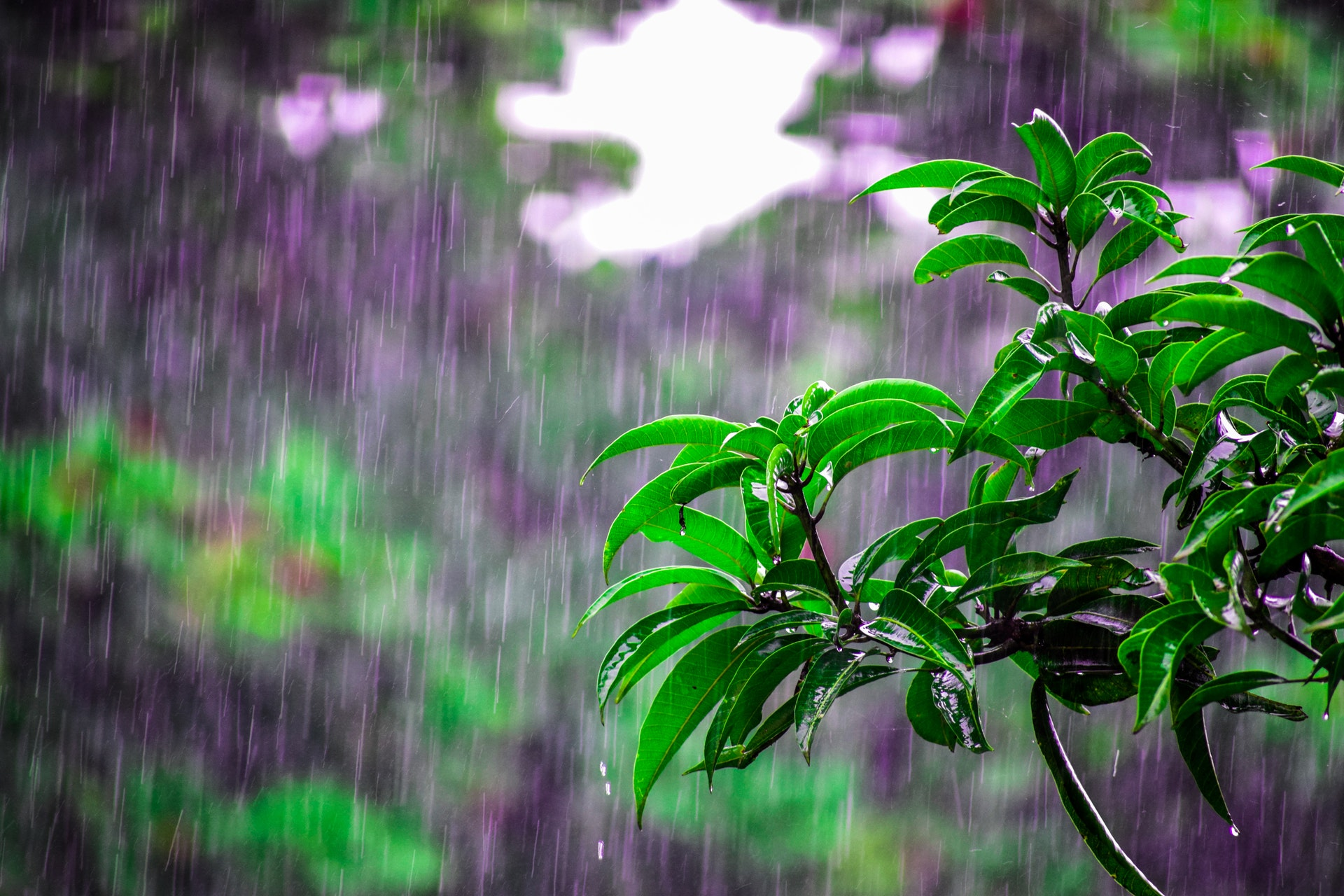 rainy-days-get-rid-of-pollen-ste-do-cli