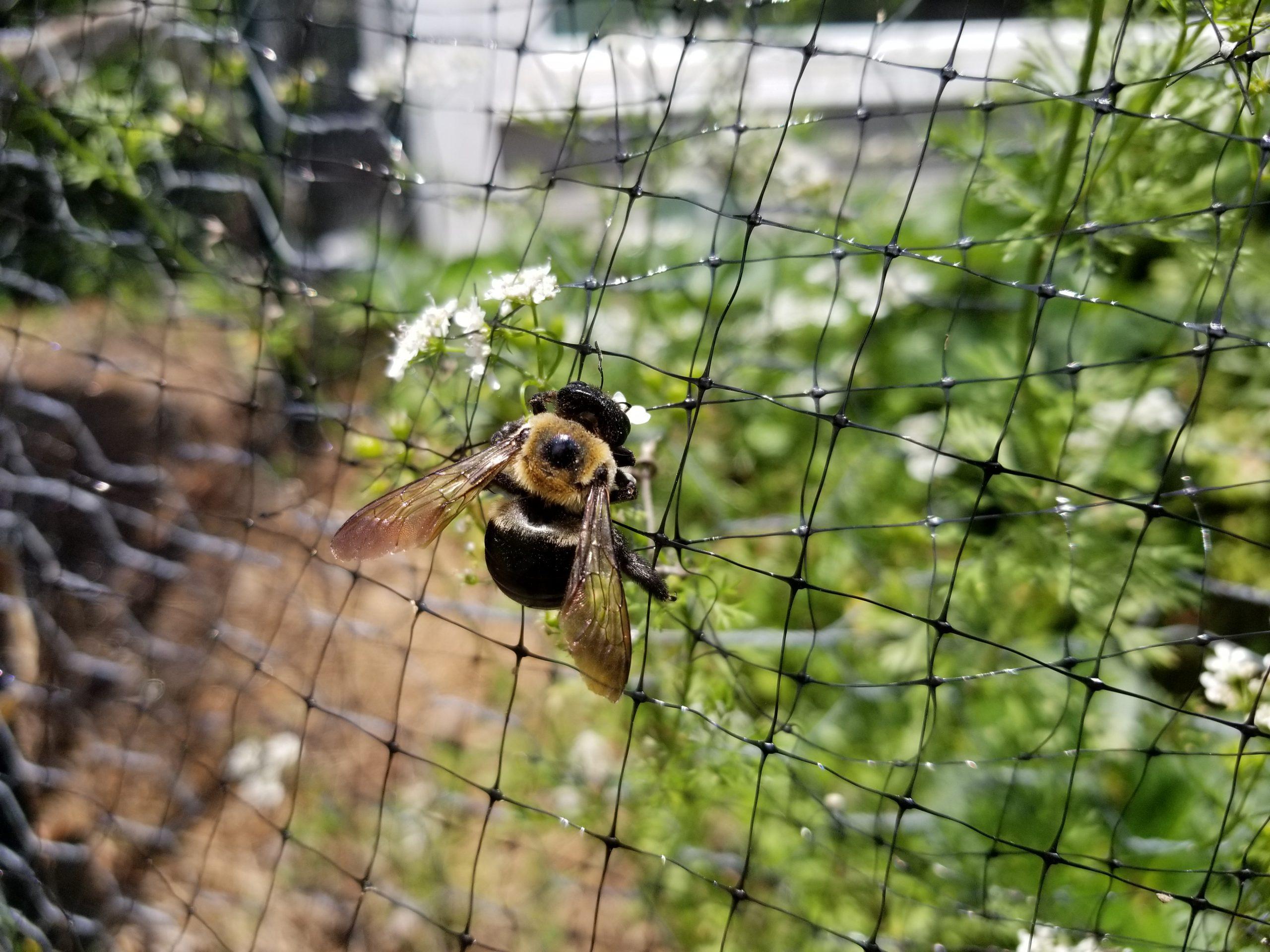 bees-in-the-garden-ste-do-cli