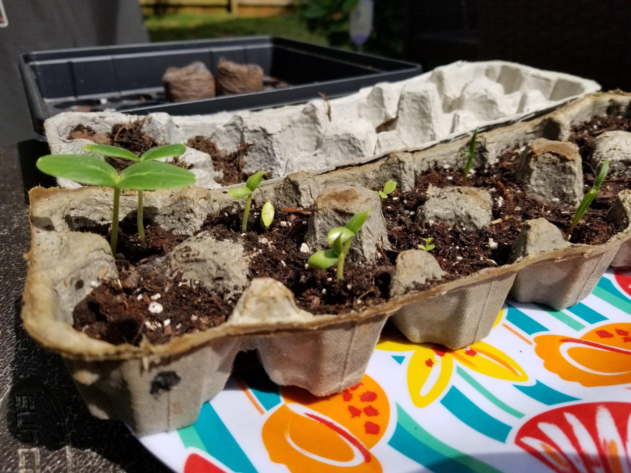 gardening-hack-ste-do-cli